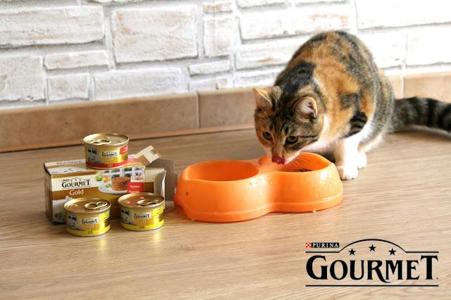 Gatto che mangia gourmet