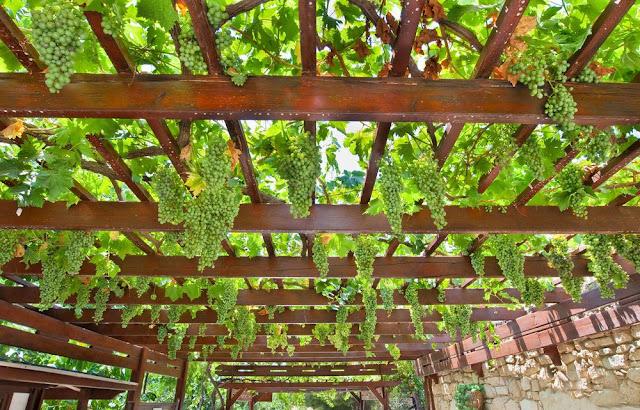 9 Ide Berkebun Membuat Tempat Berteduh yang Nyaman dan Keren di Rumah.