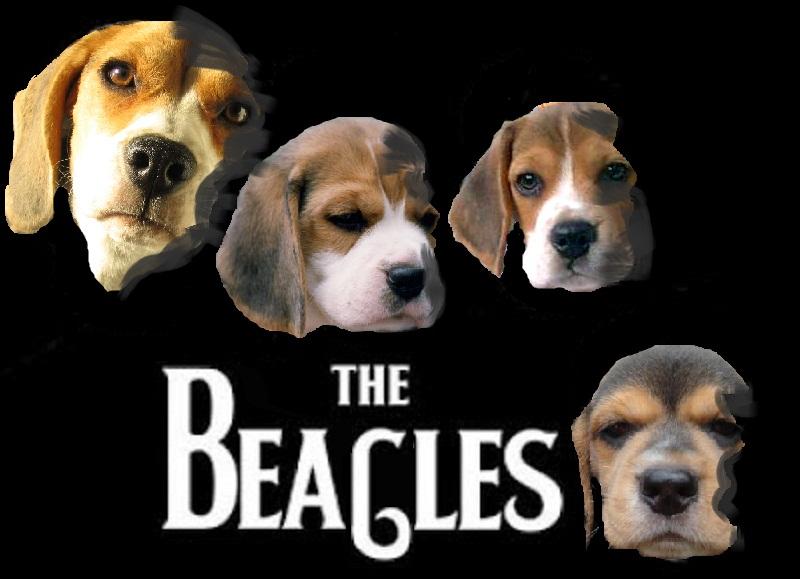the+beagles.jpg