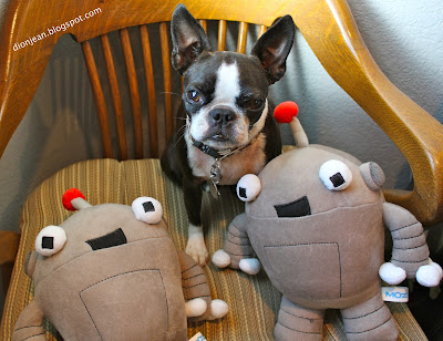 Sinead the Boston terrier with Moz toys
