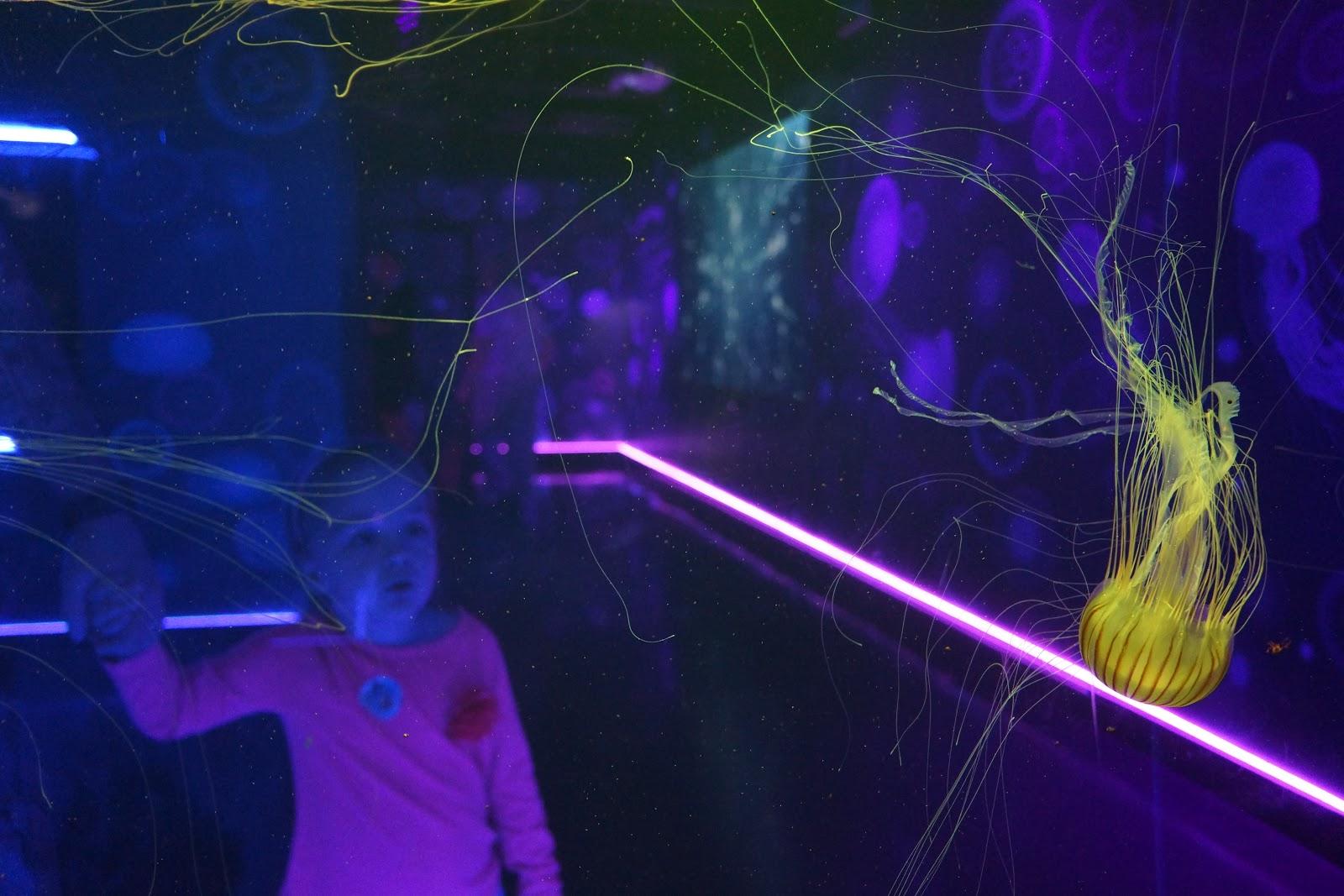 a photograph through the see-through jellyfish wall at london aquarium