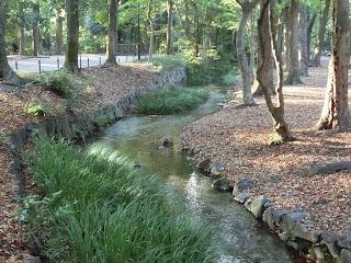 下鴨神社・瀬見の小川