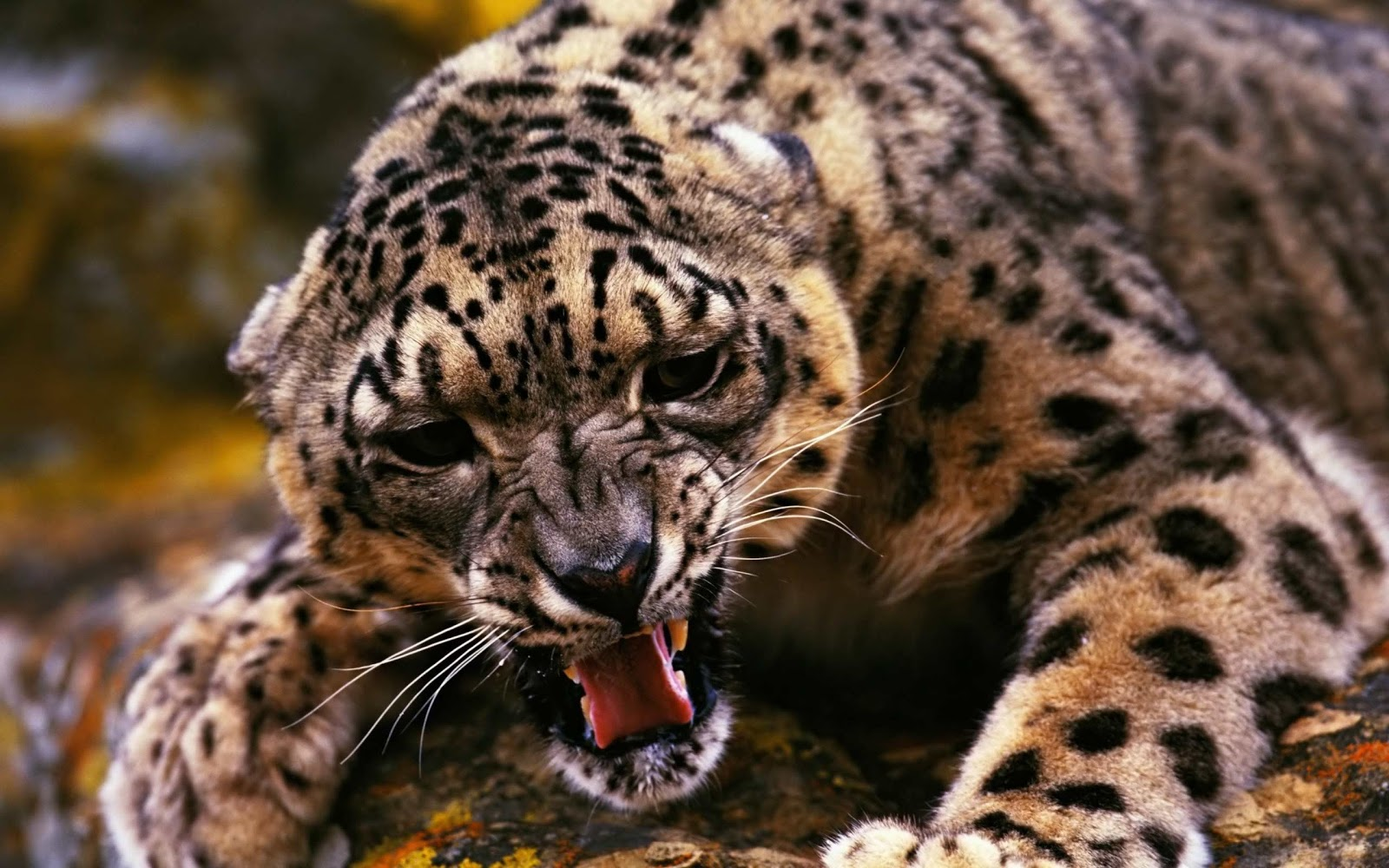 Jaguar hd wallpapers earth blog - Jaguar hd pics ...