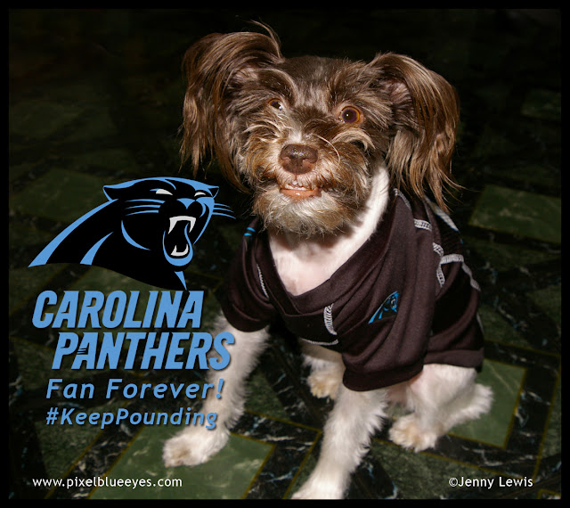 Pixel Blue Eyes is a Carolina Panthers Fan Forever, Keep Pounding!