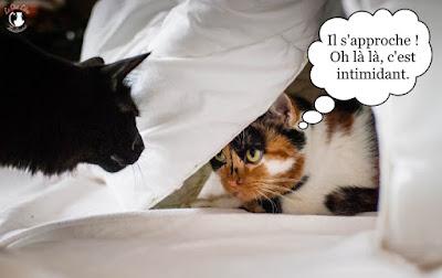 Quand le chat noir rencontre la chatte isabelle.