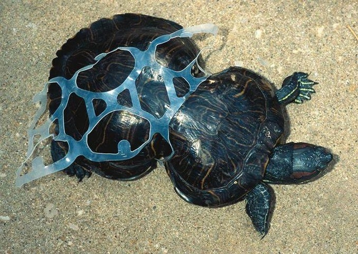 15 Pictures Explain Why Throwing Away Plastic Bottles Puts Our World In Great Danger