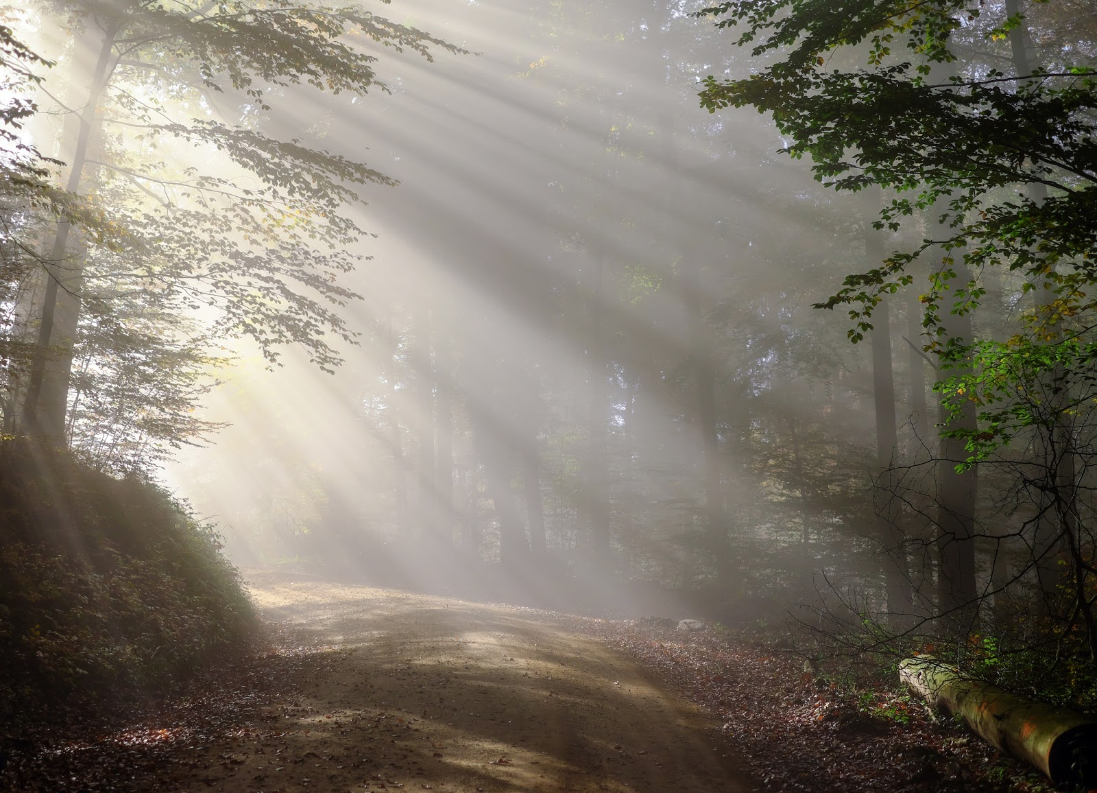 霧の朝の森