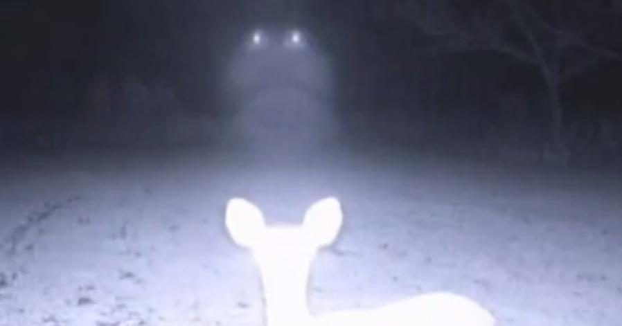 Ufo Sightings Daily Glowing Ufos Caught On Deer Cam In
