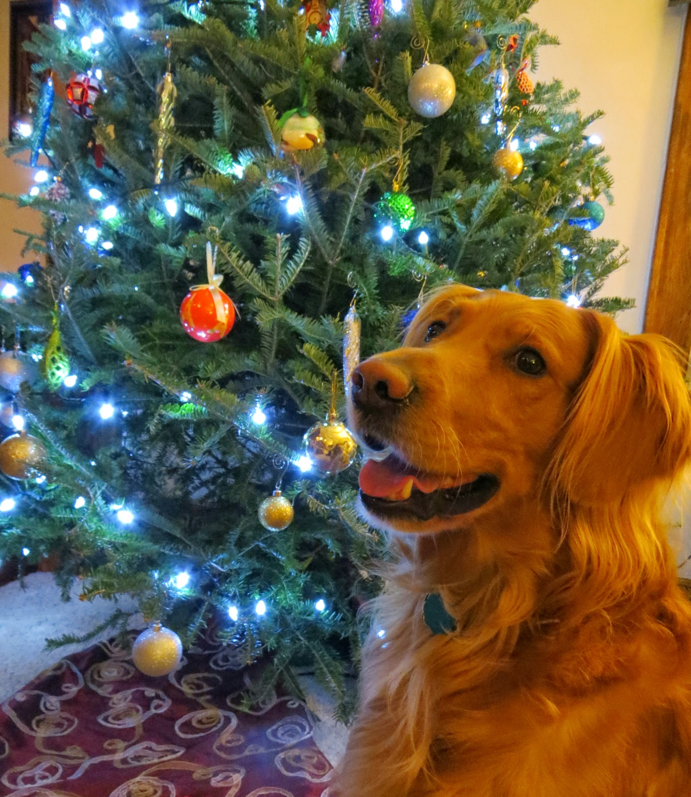 Christmas Tree Done: Beautifully Candid: Christmas Tree Do's And Don'ts With A
