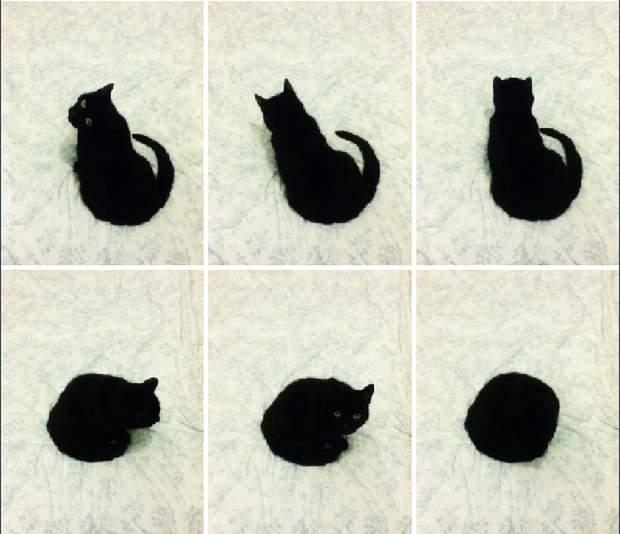 Funny cats - part 194, funny cat picture, cute cat, best cute cats, cat photos