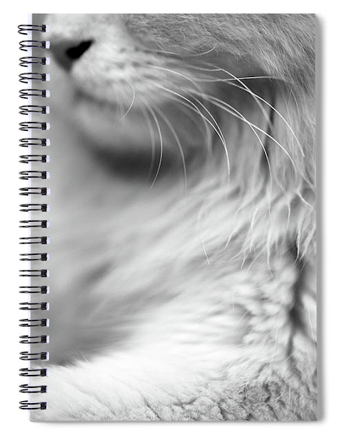 Kitty / Cat Themed Office Stationery