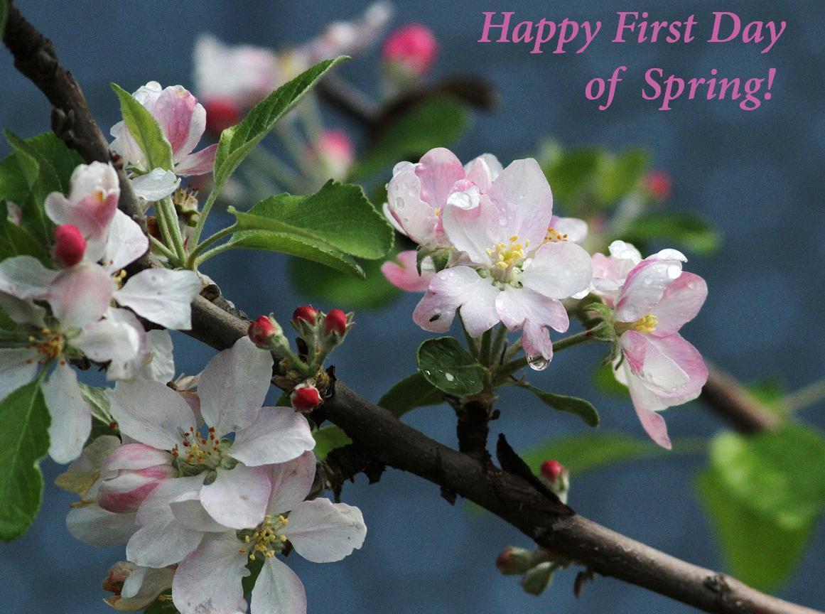spring happy morning