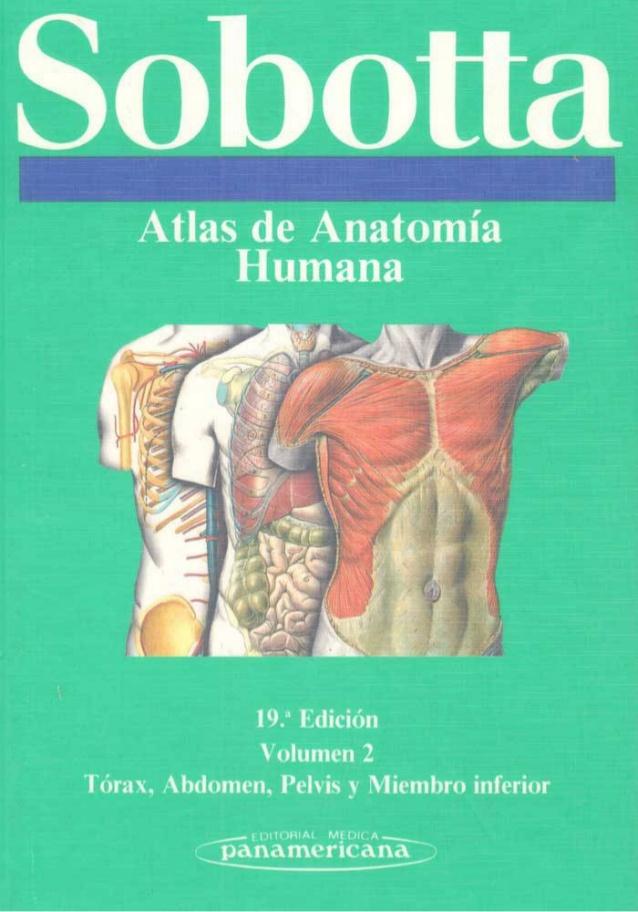 Libros en pdf de kinesiolog a y fisioterapia Libros de ceramica pdf