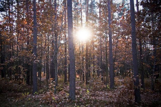 غابات,بيالويزا,أوروبا,غابات بدائية