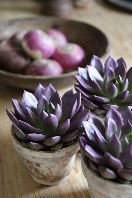 purple succulent wedding favors