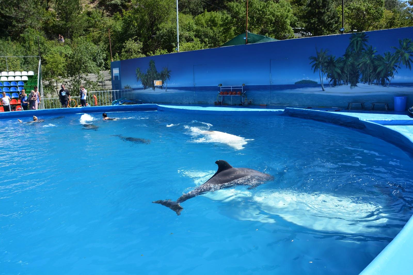 стенд можно дельфинарий ялта фото популярными было предположение
