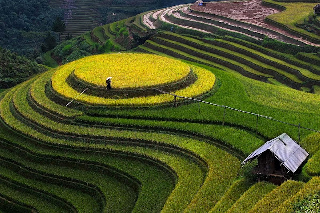 History of Mu Cang Chai terraced fields 3