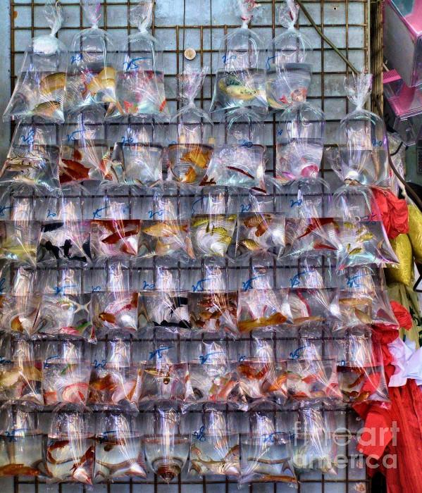 Beautiful Styles Of Fish Aquariums Download Photos