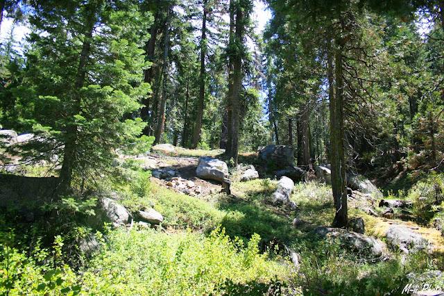 M-ii Photo : Sequoia National Park