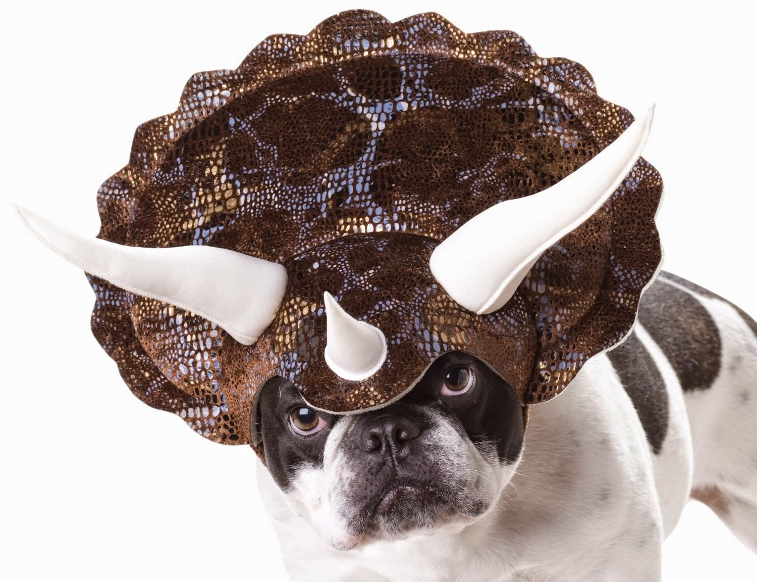 Halloween costume head piece for dogs