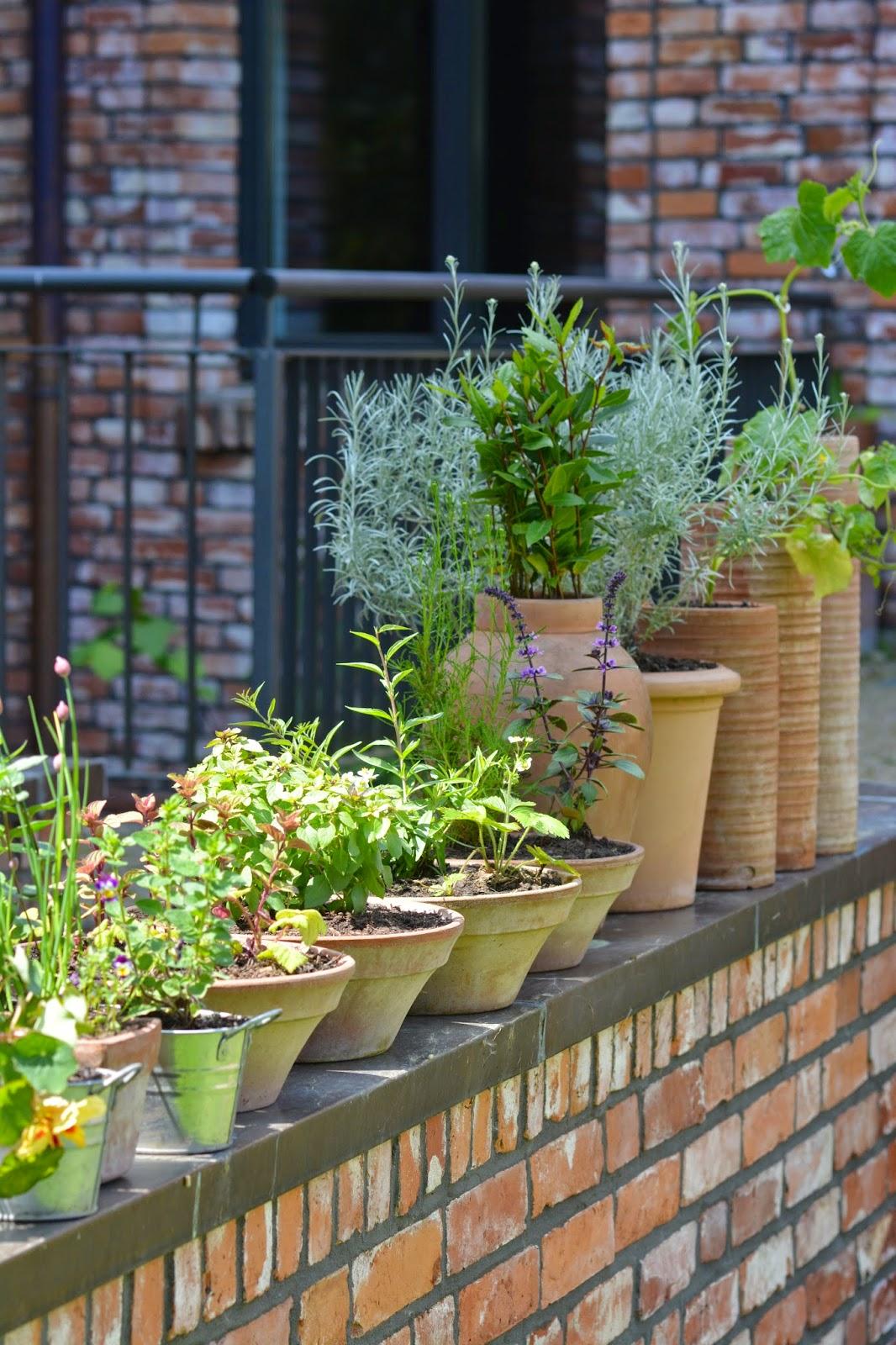 Malachitschatulle Essbare Pflanzen Die Sich Fur Jeden Balkon Und