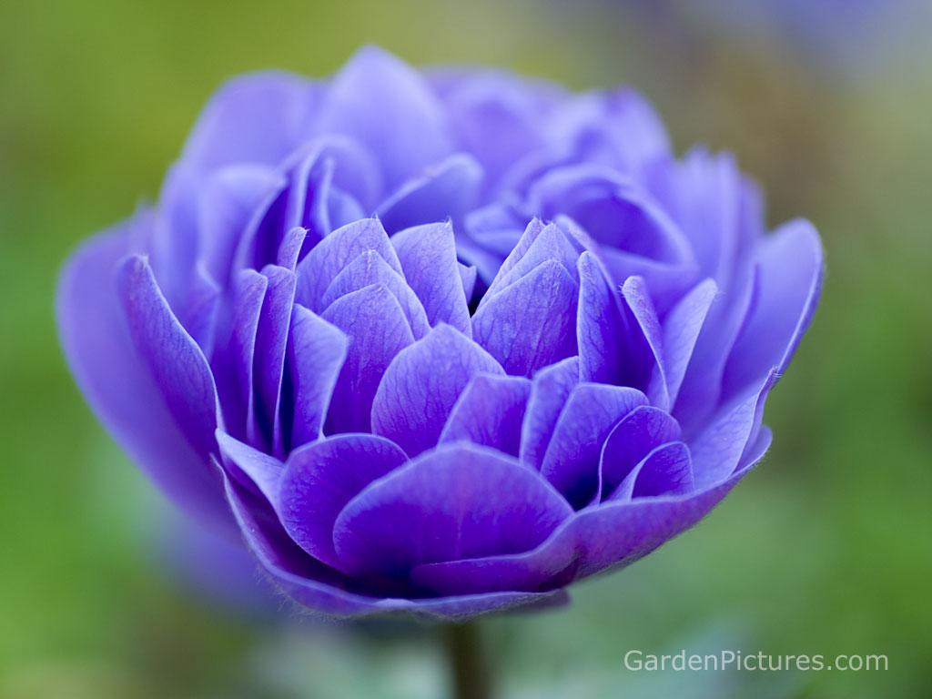 wallpaper: Beautiful Flowers Wallpaper Free Download