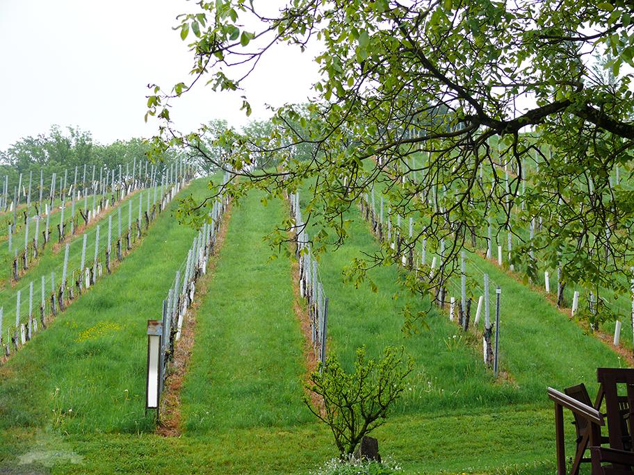 Weinberge Weingut Polz