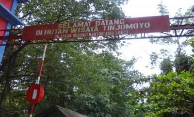 Wisata Alam Hutan Raya Yang Menjadi Favorit Traveler Muda