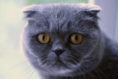 Fakta Menarik Tentang Kucing Yang Harus Diketahui