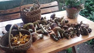 borowik, podgrzybek brunatny, maślak pstry, miodak, kurka, pieprznik jadalny