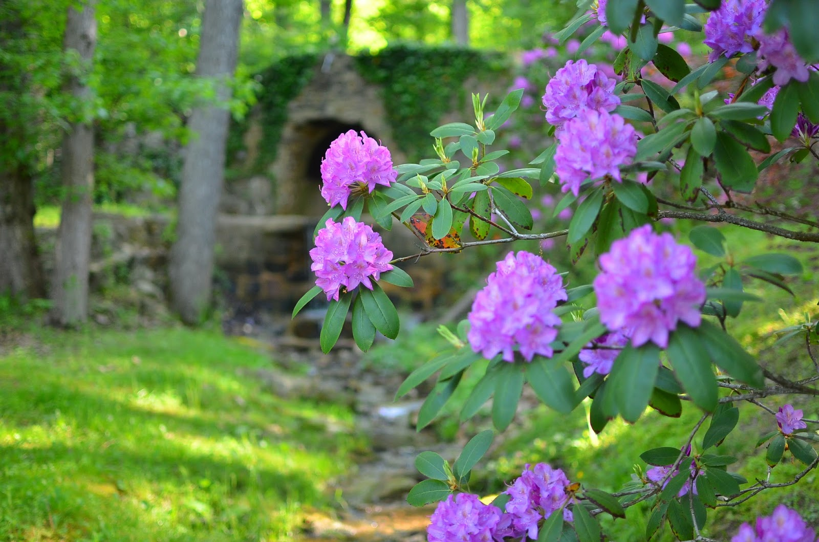 Rhododendron Classic Traditional Shade Garden in Pennsylvania