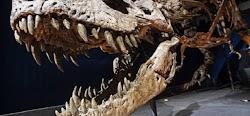 Επιστήμονες ανακάλυψαν στη νοτιοδυτική Τανζανία το απολίθωμα ενός φυτοφάγου δεινόσαυρου με μακρύ λαιμό και μακριά ουρά, ο οποίος υπήρξε ένα...