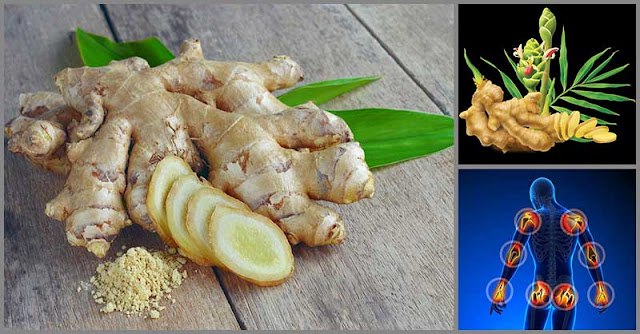 Ginger Root: A Potent Remedy Against Joint Pain