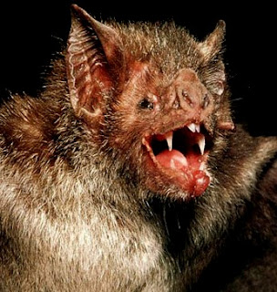 Bats ,Vampire Bats ,Flying Foxes and Bumblebee Bat Facts