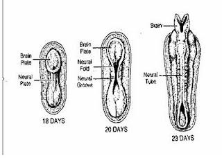 Riset: Kegemukan Pengaruhi Kualitas Sperma Anda !!!