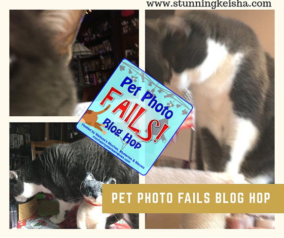 Pet Photo Fails, Guest Photographer Edition