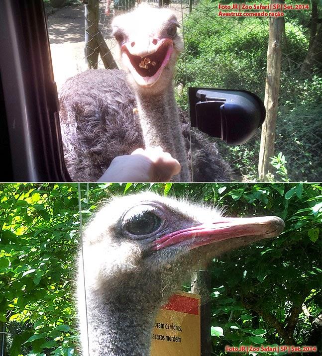 Avestruz comendo na mão | Zoo Safari SP