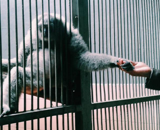 foto kebun binatang ragunan