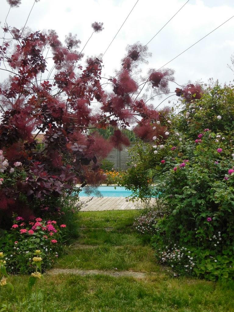 Cagouille's garden : visite de jardin : le jardin de la couture !