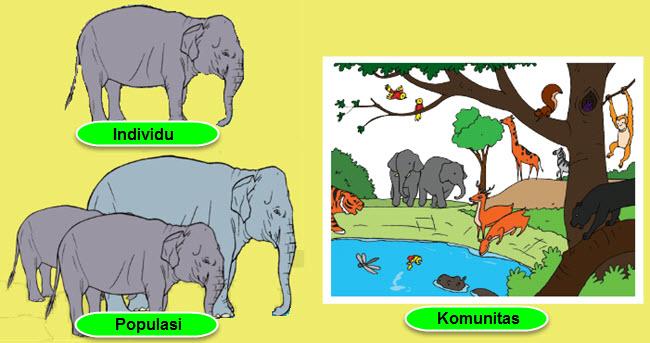 Semua makhluk hidup memerlukan lingkungan tertentu untuk memenuhi kebutuhannya Pikiran Utama dan Informasi Penting Teks Ekosistem