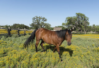 Arizona Horse Properties talks about how perfect Prescott is for horse back riding.