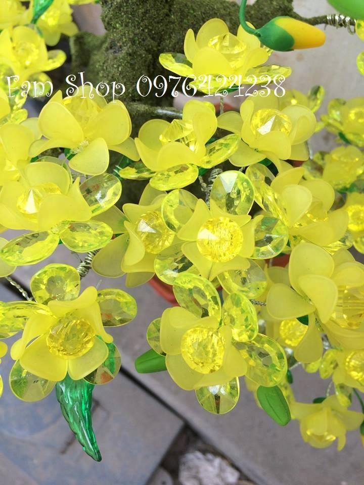 Canh hoa mai lam goc bonsai mai dao o Dinh Le