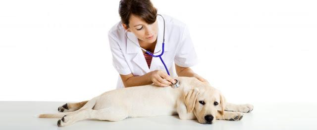 veteriner ne kadar kazanıyor