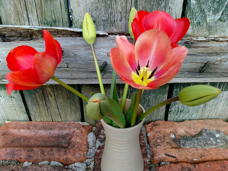 These Are Our Tulips Today >> The Silverscrapper S Craft Space In A Vase On Monday Tulip Time