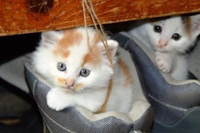 bahaya-kucing-bagi-ibu-hamil