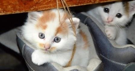Bahaya Kucing Bagi Ibu Hamil Dan Pencegahannya Tanda Hamil