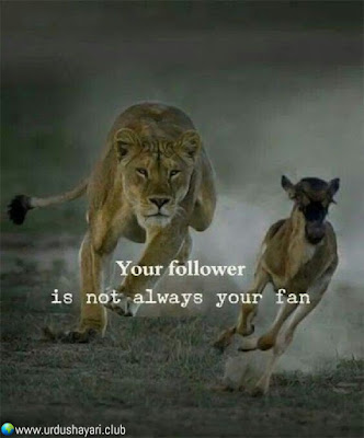 Your Follower  Is Not Always Your Fan..!!  #Inspirationalquotes #motivationalquotes  #quotes