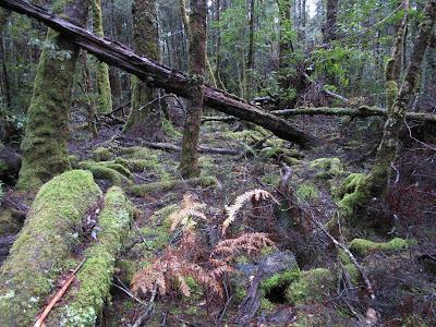 Bosque junto al río Franklin, Tasmania