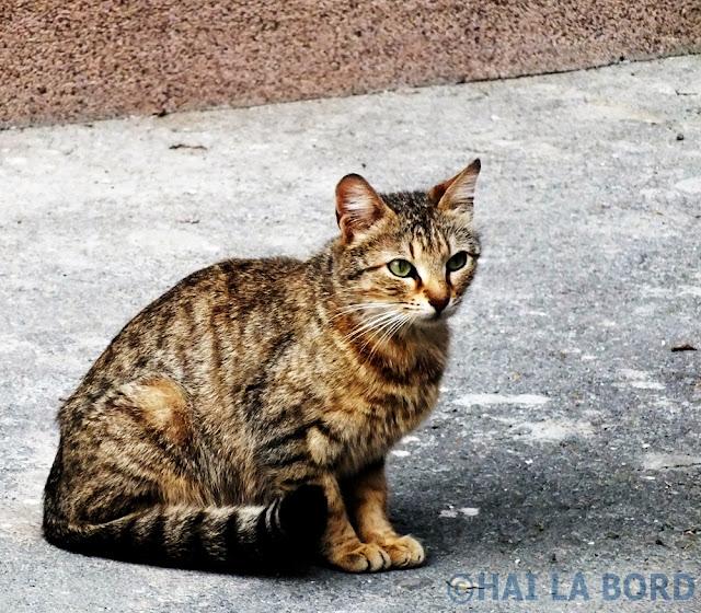 pisica pe strada bucuresti