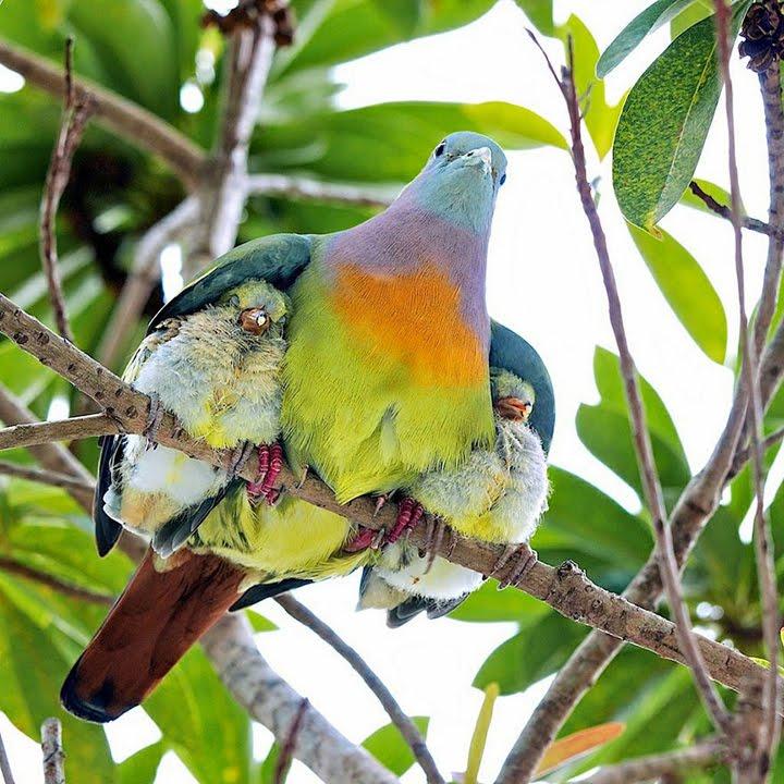 kuş resimler